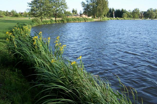 Svitavský rybník